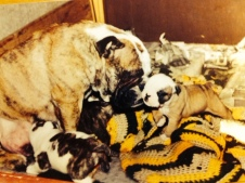 Swaby - Bulldogs Nursing