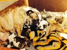 Swaby - Bulldogs Nursing