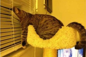 http://justsomething.co/the-37-funniest-photos-of-cats-sleeping-in-the-most-awkward-positions/