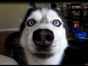 www.dogscountryclub.blogspot.com
