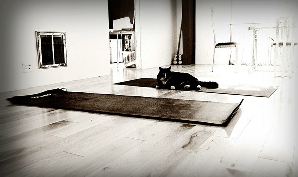 Jesus and My Yoga Cat