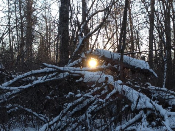 Sunset through the thicket